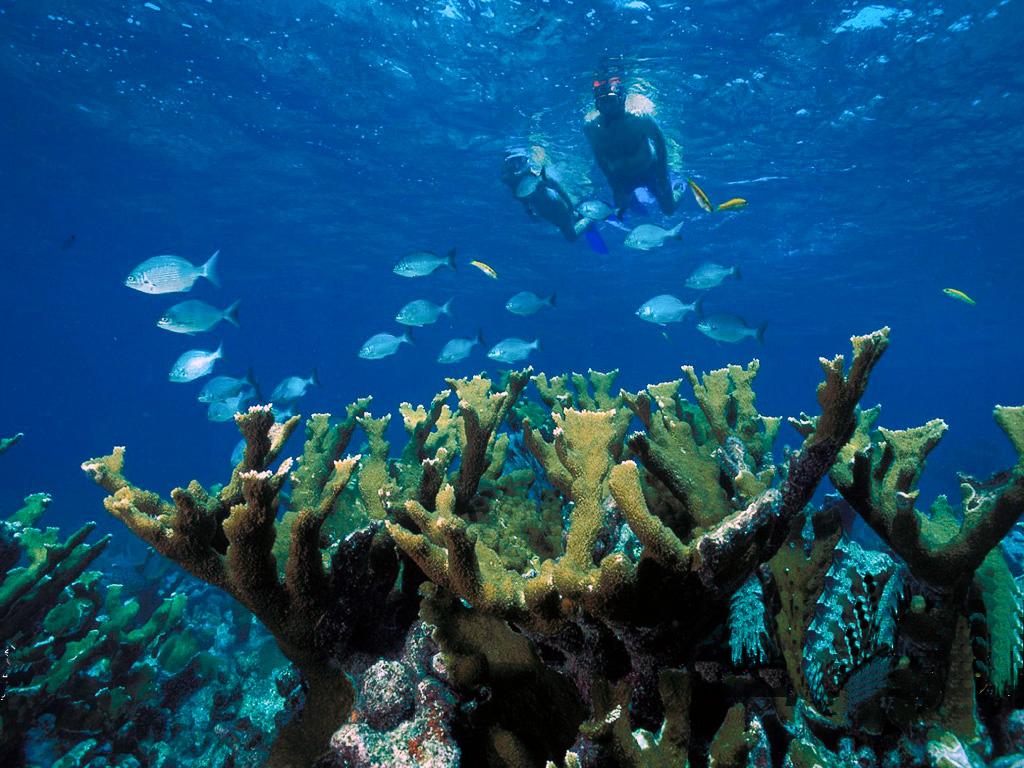 Caribbean Snorkeling Adventure On The Riviera Maya