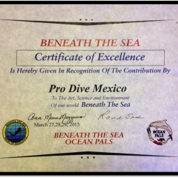 BTS Certificate of Excellence PDM