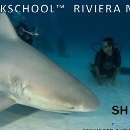 Sharkschool pic