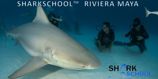Sharkschool pic