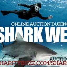 Twitter_Shark Angels Auction Shark Week Header
